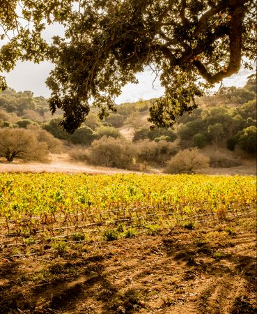 11b7ec0bbb D.F.  How does viticulture help bring out the aesthetic properties (e.g.  beauty